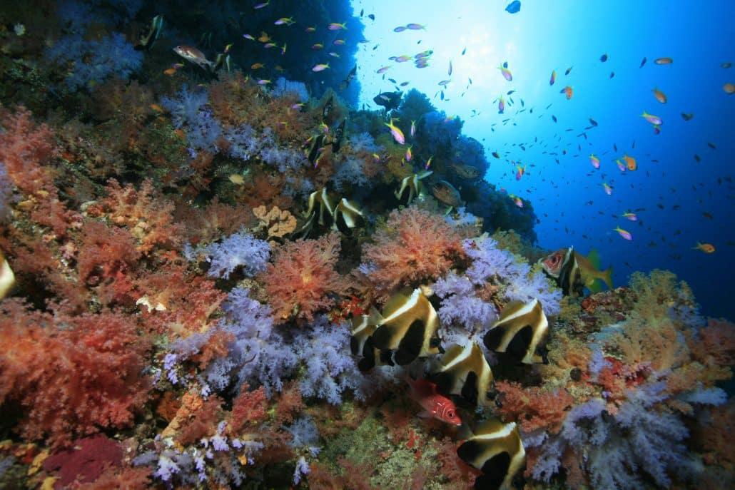 joli thila et son corail en croisière plongée avec OK Maldives