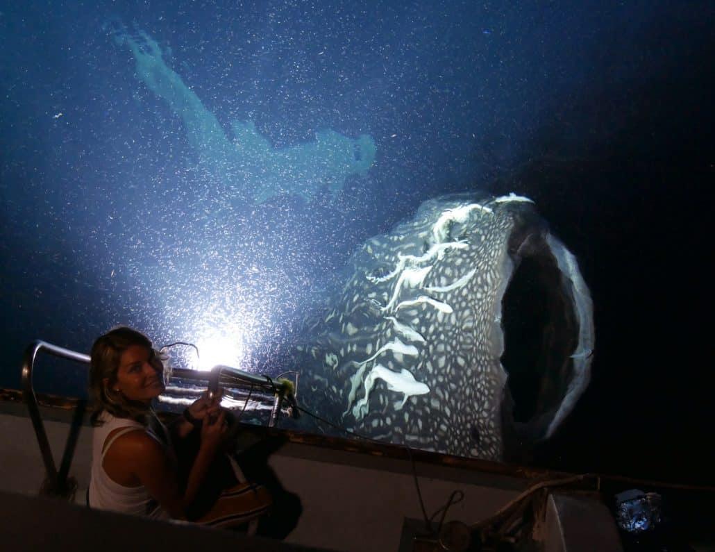 requin baleine en surface de nuit en croisière plongée avec OK Maldives
