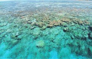 platier de corail aux Maldives pour article de presse